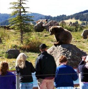 Jobs at Monana Grizzly Encounter | EnvironmentalCareer com